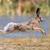 hare stock photo © byrdyak