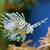 lionfish stock photo © byrdyak