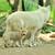 sarkköri · farkas · sarki · kutya · erdő · természet - stock fotó © byrdyak