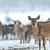 deer stock photo © byrdyak