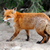 kırmızı · tilki · doğa · aile · köpek - stok fotoğraf © byrdyak