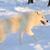 белый · волка · лес · природы · деревья · животного - Сток-фото © byrdyak