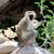 maymun · üç · monkeys · park · ağaç · yüz - stok fotoğraf © byrdyak