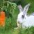 ウサギ · 食べ · 草 · 市 · 公園 · 春 - ストックフォト © byrdyak