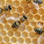 vliegen · honing · bijen · kleur · bijenkorf · man - stockfoto © byrdyak