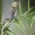 camaleão · família · velho · mundo · espécies - foto stock © byrdyak