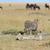 vad · afrikai · gepárd · Afrika · Kenya · víz - stock fotó © byrdyak