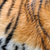 тигр · детали · темно · фон - Сток-фото © byrdyak