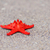 Rood · zeester · wit · zand · zonnige · tropisch · strand · hemel - stockfoto © byrdyak