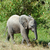 elefánt · baba · áll · védett · tehén · bika - stock fotó © byrdyak