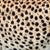 cheetah · huid · mode · kat - stockfoto © byrdyak