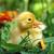黄色 · 小 · カモ · 卵 · 孤立した · 白 - ストックフォト © byrdyak