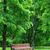 rosolare · legno · giardino · panchina · erba · verde · verde - foto d'archivio © byrdyak