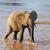 olifant · baby · stand · beschermd · koe · stier - stockfoto © byrdyak
