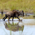 blau · Fuß · trocken · Wüste · Südafrika · Natur - stock foto © byrdyak