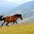 ló · nyár · testtartás · hegyek · gyönyörű · kilátás - stock fotó © byrdyak