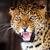 leopard · portret · ciemne · oka · twarz · Afryki - zdjęcia stock © byrdyak