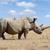 赤ちゃん · 白 · サイ · 公園 · 南アフリカ · 自然 - ストックフォト © byrdyak