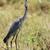 heron stock photo © byrdyak