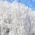зима · области · Солнечный · морозный · день · Blue · Sky - Сток-фото © byrdyak