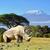 白 · サイ · フロント · 公園 · 南アフリカ · 芸術 - ストックフォト © byrdyak