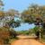 camino · de · tierra · tropicales · forestales · sol · brillante · paisaje - foto stock © byrdyak