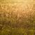 száraz · mező · fű · ősz · absztrakt · háttér - stock fotó © c12