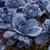 vermelho · repolho · campo · crescer · comida · natureza - foto stock © c12
