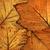 leaves stock photo © c12