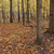 forest floor in fall stock photo © ca2hill