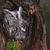 Sowa · wschodniej · posiedzenia · drzewo · oka - zdjęcia stock © ca2hill