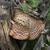 寄生虫 · 菌 · 成長 · 木の幹 · ツリー · 森林 - ストックフォト © ca2hill