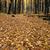 martwe · drzewa · mleczny · sposób · niebo · krajobraz · przestrzeni - zdjęcia stock © ca2hill