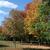 çim · şekerkamışı · mavi · gökyüzü · doğa · yaz · bitki - stok fotoğraf © ca2hill