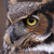 Great Horned Owl Eye stock photo © ca2hill