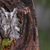 uil · vergadering · zonnige · bos · gezicht · ogen - stockfoto © ca2hill
