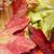 黄色 · 秋 · メイプル · 葉 · ツリー - ストックフォト © ca2hill