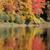 осень · огня · оранжевый · красный · цветами · отражение - Сток-фото © ca2hill