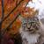 кошки · дерево · осень · красивой · Китти · сидят - Сток-фото © ca2hill