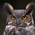 bagoly · profil · arc · szemek · természet · tél - stock fotó © ca2hill