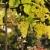fehérbor · szőlő · szőlőskert · helyes · aratás · szín - stock fotó © calek