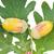 dąb · pozostawia · odizolowany · biały · tle · pomarańczowy - zdjęcia stock © calek