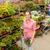 garden centre woman shopping plants stock photo © candyboxphoto