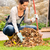 düşmek · yaprakları · bahçe · kırmızı · akçaağaç · yeşil · ot - stok fotoğraf © candyboxphoto
