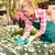coloré · Daisy · fleurs · pot · à · fleurs · isolé · blanche - photo stock © candyboxphoto