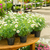potted flowers on table in garden shop stock photo © candyboxphoto