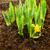 fide · bahar · çiçekleri · büyüyen · doğa · bitki · buket - stok fotoğraf © candyboxphoto