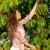 cerise · nature · fruits · ferme · laisse - photo stock © candyboxphoto