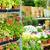 подвесной · цветы · банка · великолепный · кирпичная · стена · стены - Сток-фото © candyboxphoto