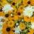 doku · güzel · beyaz · turuncu · çiçekler · doğa - stok fotoğraf © carenas1
